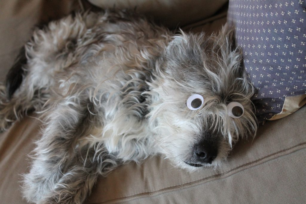 dog-with-eyes