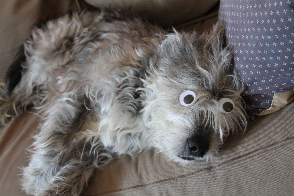 dog-with-eyes